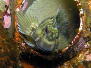 カエルウオと卵