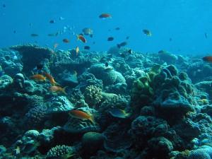 今も美しい水納島の海中